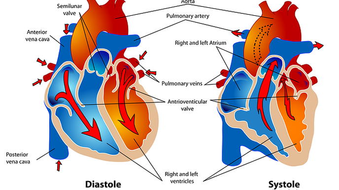 Congenital Heart Defects May Not Increase the Risk of Severe COVID-19 Symptoms