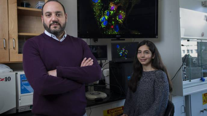 Procedure Could Unlock Cures for Heart Disease, Cancer, & Neurodegenerative Disorders