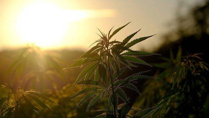 Study: Cannabis Is Effective In Treating Depression & Improving Mental Health
