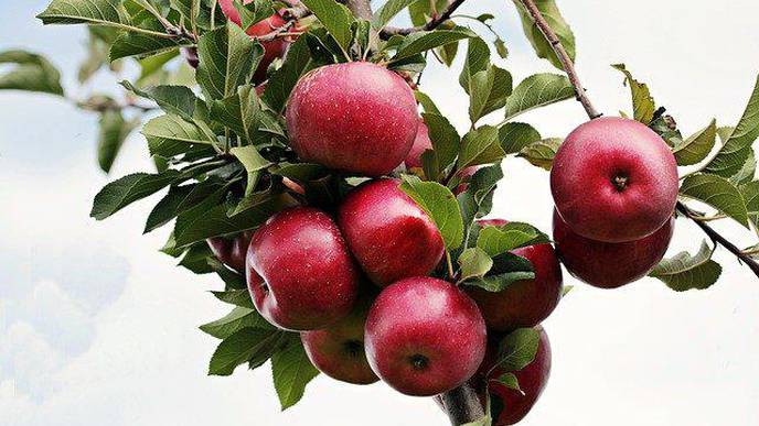 Low Flavonoid Intake Associated with Alzheimer's Risk